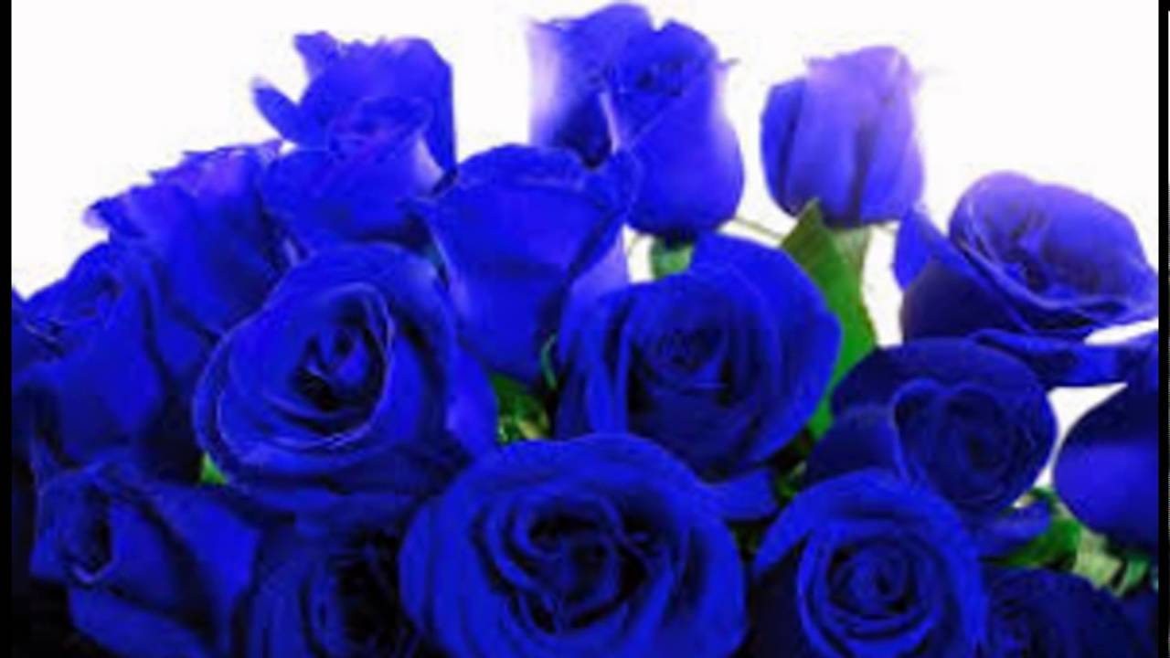 Koleksi Gambar Bunga Mawar Youtube