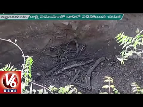 Cheetah Falls into a Well at Venkatrao Palli   Drought hits Karimnagar Forest   V6 News