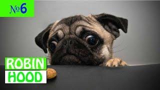 ПРИКОЛЫ 2017 с животными. Смешные Коты, Собаки, Попугаи // Funny Dogs Cats Compilation. Январь №6