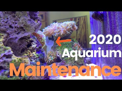 Saltwater Aquarium  Maintenance: Weekly, Monthly, Annual