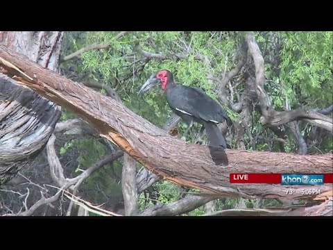 Hawaii Severe Weather Update & Honolulu Zoo Bird Found