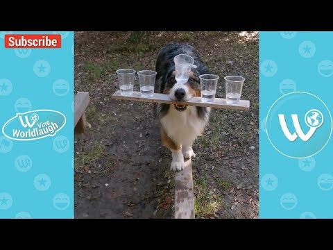 Try Not To Laugh Watching Funny Animals Compilation January 2018 #4 – Vine Worldlaugh