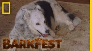 Smart Dog Profile: Chaser | BarkFest