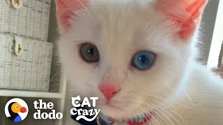 The Stages Of Getting A Second Cat  | The Dodo Cat Crazy