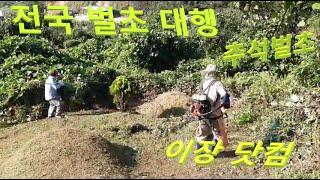 이장닷컴 벌초편, 전국벌초대행, 산소관리, 경기도벌초,…