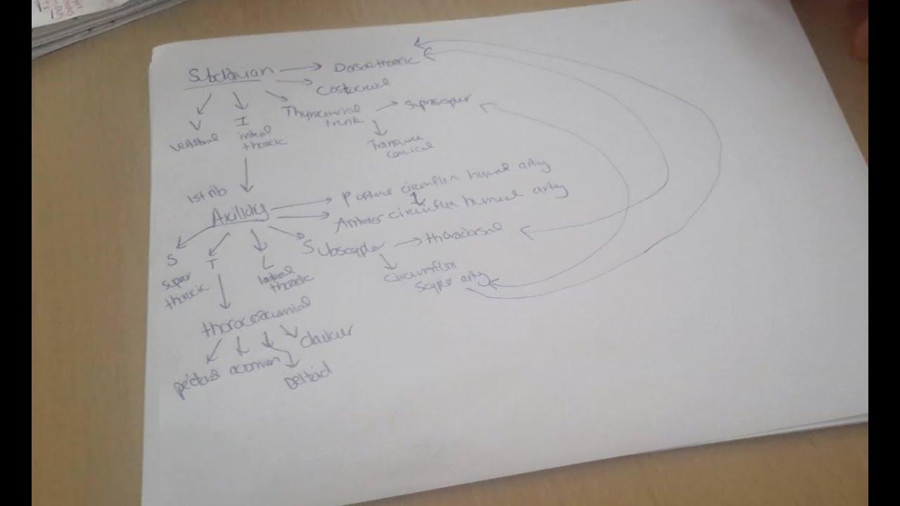 Em notes | Anatomy | Subclavian Axillary Artery Pneumonics - YouTube