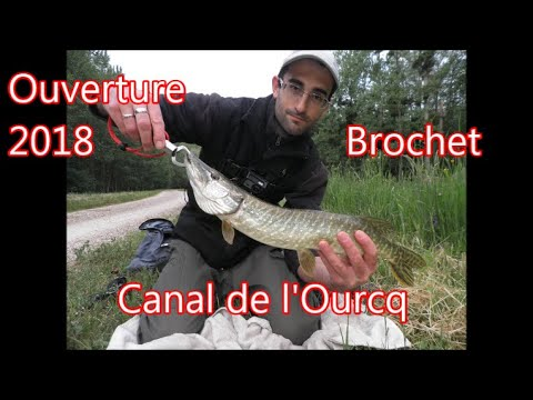 Brochet 53cm ouverture 2018 Canal de l'Ourcq (Mareuil sur Ourcq).