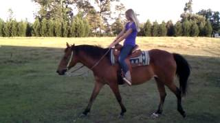 Dead Broke Mare 14.3 hands tall saddle up and ride