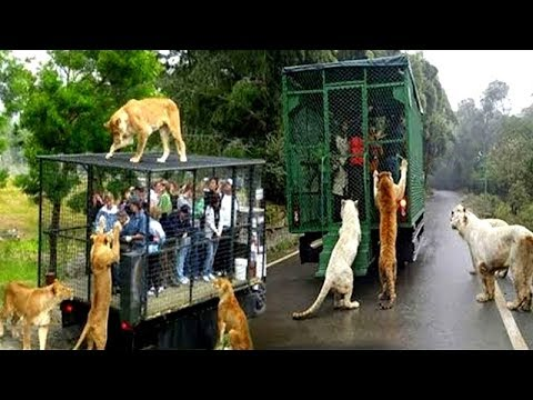 7 Zoológicos Que Son Únicos En El Mundo