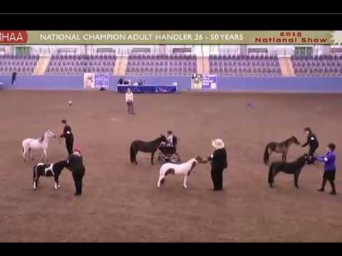 Miniature Horse Association of Australia Adult Handler Championships 2015
