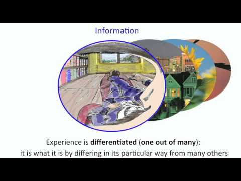 Integrated Information Theory   explained