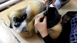 видео меховой жилет из лисы купить