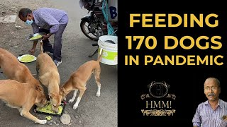 Feeding 170 Dogs in Pandemic