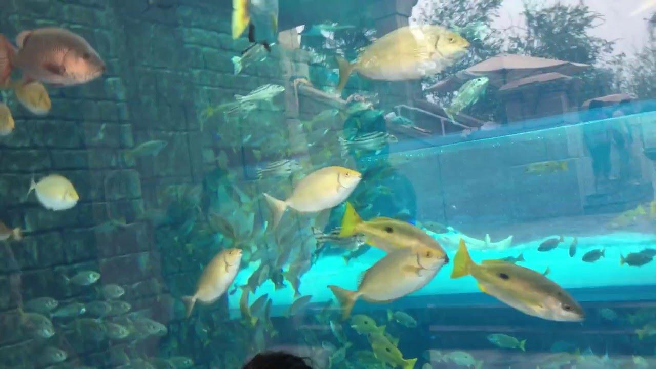 Freshwater aquarium fish in dubai - Dubai Aquarium Atlantis Dubai The Palm Hotel Atlantis Aquarium Dubai Atlantis Aquariums