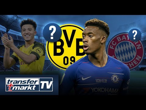 Konkurrenz für Bayern: Auch BVB will Hudson-Odoi – Sancho ein Faktor?   TRANSFERMARKT