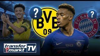 Konkurrenz für Bayern: Auch BVB will Hudson-Odoi – Sancho ein Faktor? | TRANSFERMARKT