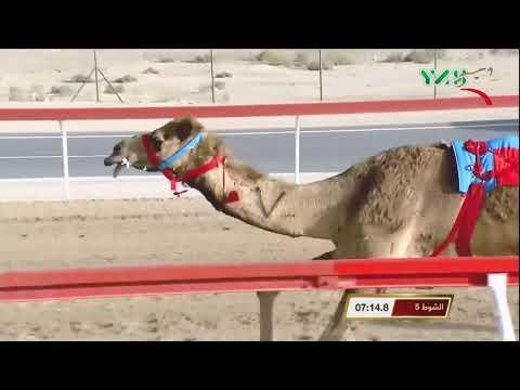 مهرجان ختامي الوثبة –...