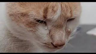 الحيوانات أيضا لديها مشاعر  حاول ان لا تبكي من هذا الفيديو