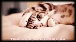 Flëur - Тёплые коты (Cálidos gatos - Sub Español)