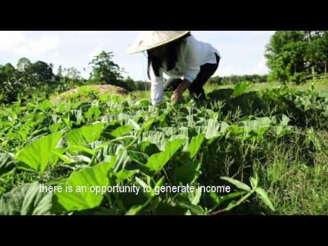 Millionaire Farmers' Testimony