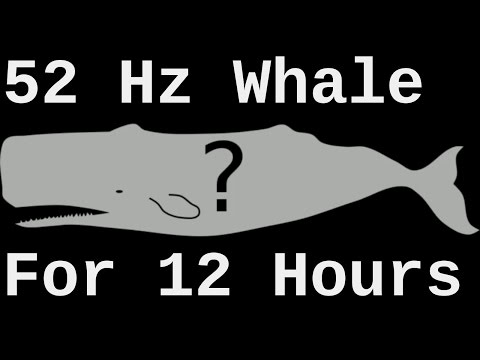52 hz Whale Song Actual Speed ( World's Loneliest Whale for 12 Hours )