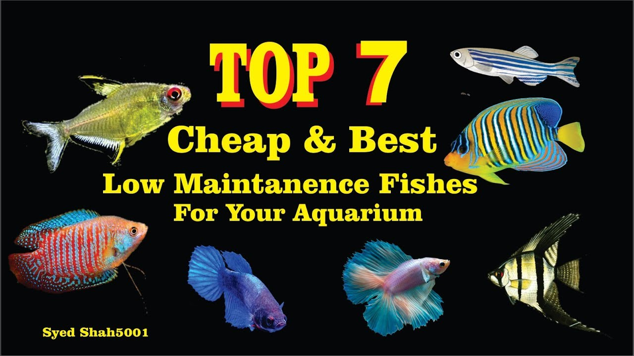 Top 7 Cheap And Best Fishes For Aquarium Low Prices Fishes Hindi