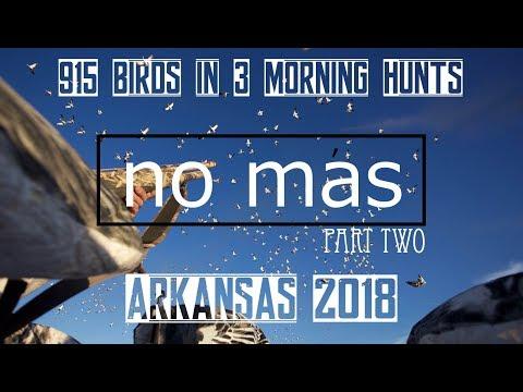 Spring Snow Goose Hunting Arkansas 2018 (No Mas Part Two) Epic 915 Birds In 3 Morning Hunts !!