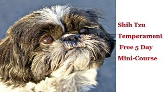 Shih Tzu Temperament-best Shih Tzu Temperament Tips & Free 5 Day Mini-­‐course