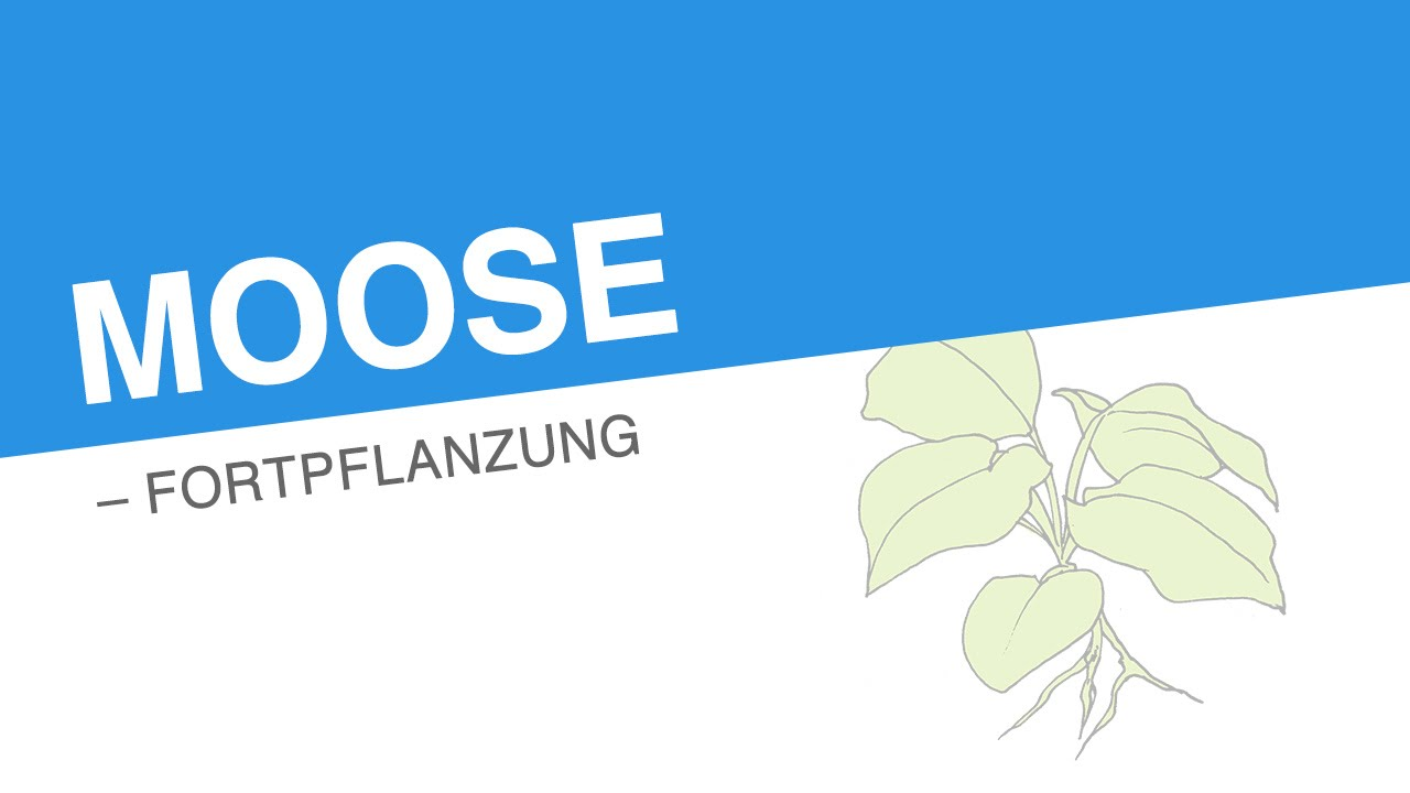 moose fortpflanzung biologie biologie der pflanzen und pilze mittelstufe youtube. Black Bedroom Furniture Sets. Home Design Ideas