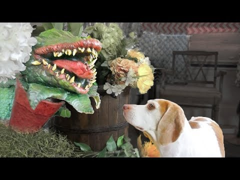 Scary Plant Pranks Dog: Funny Dog Maymo