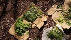 Sami Tallberg valmistaa salaattia villiyrteistä