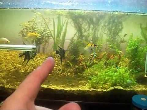 co2 in the planted aquarium youtube. Black Bedroom Furniture Sets. Home Design Ideas