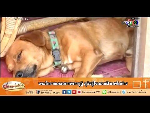 เรื่องเล่าเช้านี้ พระโคราชมรณภาพคากุฏิ สุนัขรู้ใจนอนเฝ้าศพไม่ห่าง (13 พ.ค.58)