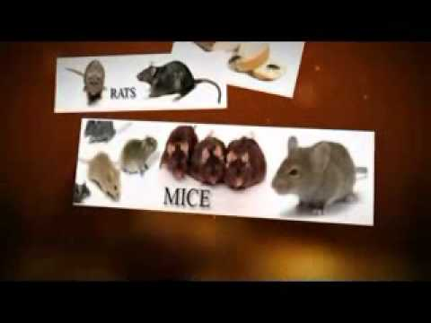 Pasadena Pest Control, 213-928-7721, Glendale pest control, rats, roaches, mice, ants, and termites
