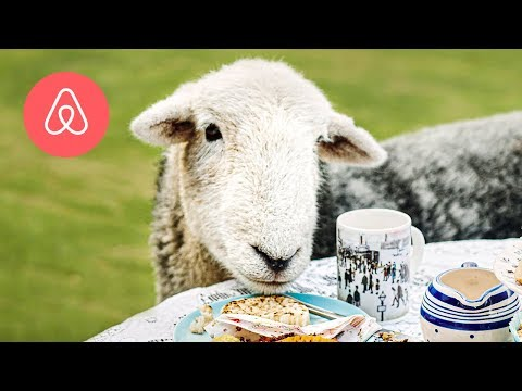 Meet the Naughty Sheep | Airbnb Experiences | Airbnb