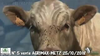LOT 5 - Vente Agrimax à Metz - 25 octobre 2018 - Simon Genetic