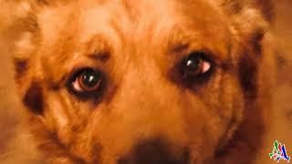 Владелец собаки умер и она оказалась в приюте Пёс не ел и просто сидел в углу глядя на стену