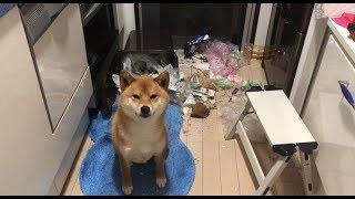 カレンダーのご注文はこちら https://shibainuyuki.stores.jp/items/5ba...