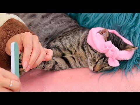 12 Fantastische Lifehacks Für Hunde und Katzen