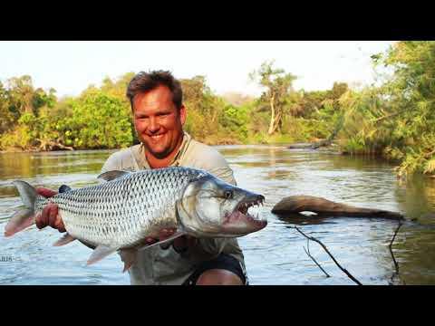 Tiger Fishing The Mnyera And Ruhudji Rivers, Tanzania CC