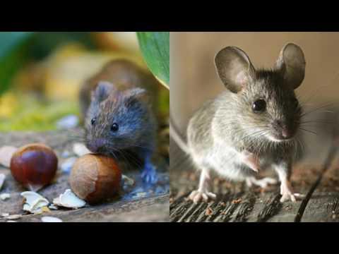 Ameri-Tech Pest Control Nevada TX 75173 Rodent Control