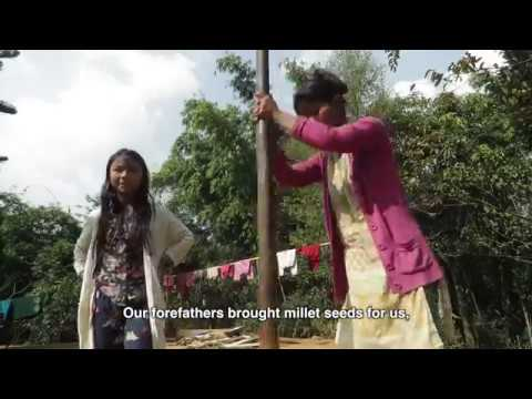 Saving the Millets, West Garo hills, Meghalaya #1