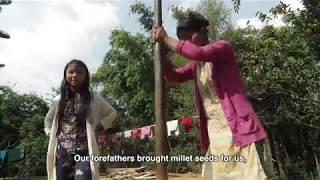 Saving the Millets, West Garo hills, Meghalaya