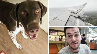 Dog Walking & Flying to Canada! Thumbnail