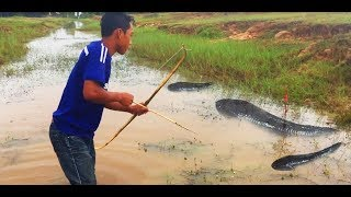 Cambodian Using Bamboo Coumpound BowFishing To Shoot Fish   How to make Bow and arrow 2017