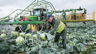 Incredible Modern Agriculture Cutting Cabbage & Seed Corn Harvesting Technology Farming Machines