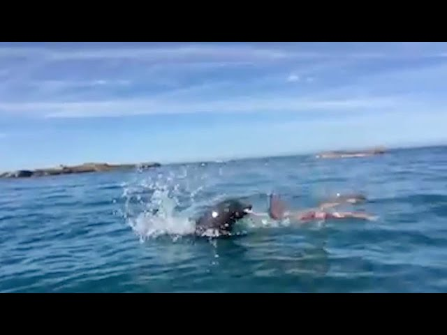 Epic Seal vs Octopus Battle
