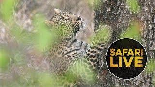 safariLIVE - Sunrise Safari - June 30, 2018 thumbnail