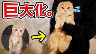 もふ猫たちの体重測定をすると意外な結果に…