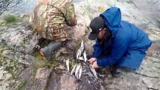 #Лосось#Хариус#Рыбалка#Осень Поклёвка хозяина, осенняя река.